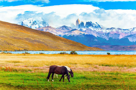 The famous Torres del Paine park in southern Chile. Lagoon Azul is amazing mountain lake at the foot of three rocks - torres. Pair of South American wild horses - mustangs graze on the grass.