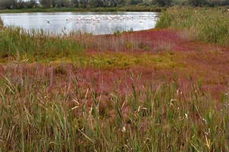Lake and bright colorful herbs in Kamarg preserve on Mediterranean Sea coast
