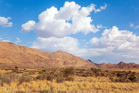The magical desert in Namibia. Hot day. Travel to Africa. Savanna covered with dry yellow grass and rare desert acacias. Lush clouds float in the blue sky.