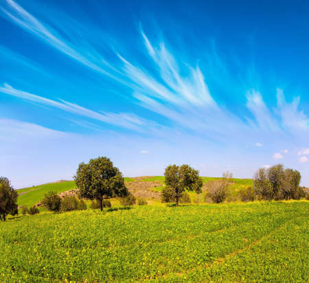 Blooming Negev Desert in early spring. Israel in bloom. Fields of spring flowers in the bright southern sun. Blue sky and light spring clouds. Magnificent spring.