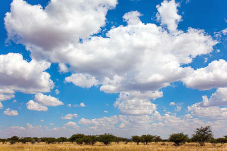 Paved highway crosses flat savannah. Lush clouds float in the blue sky. Hot day. The magical desert in Namibia. Travel to Africa.