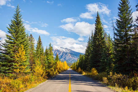 The famous Highway 93 in the Rocky Mountains of Canada. Asphalt road among coniferous forests and orange aspens. Фото со стока