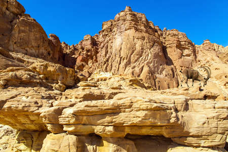 Magnificent sandstone multi-colored rocks. The Timna Valley in the south of the Arava Desert, near the resort of Eilat. Israel. Hot November day.