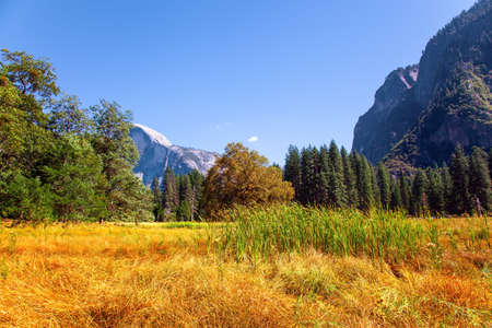 Autumn yellowed grass in the meadows of the valley. Yosemite Valley. Yosemite Park is located on the slopes of the Sierra Nevada. Фото со стока