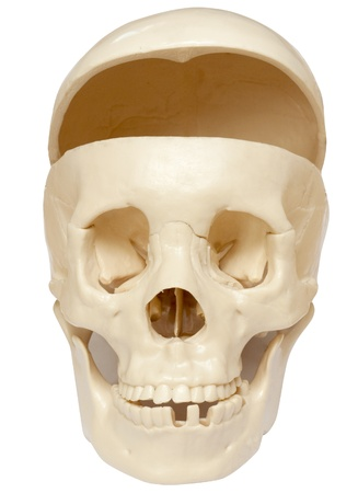 lacking: Human skull lacking a brain, isolated on white