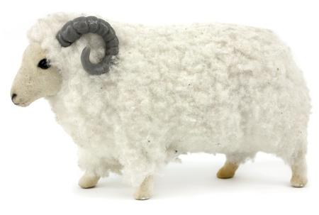 Fluffy toy ram isolated on white background photo
