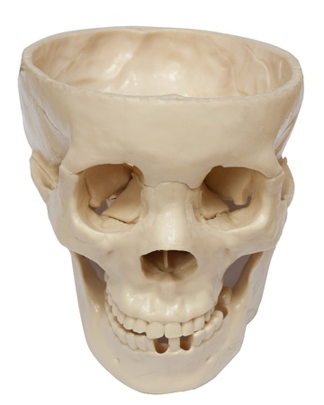 Empty human skull isolated on white background photo