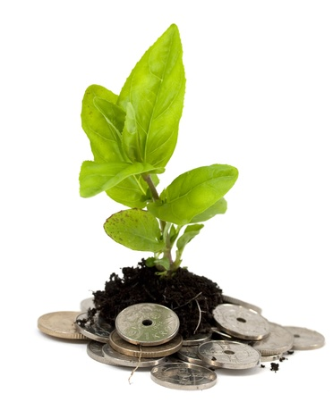 Plant growing from a pile of money photo