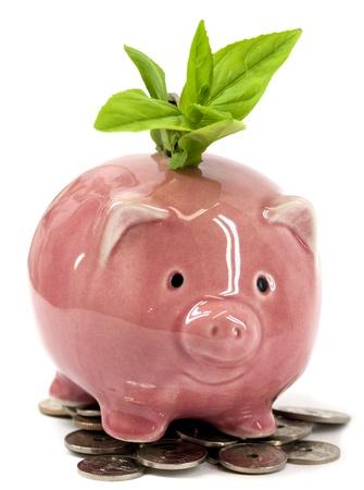 economie: Groene planten groeien van een gelukkige roze spaarvarken