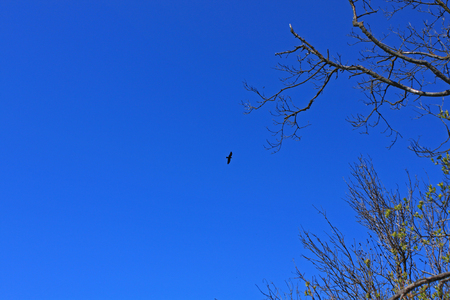 A bird flying in the blue sky