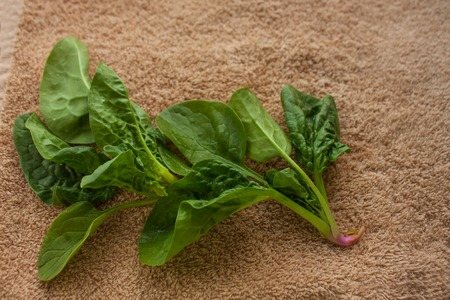 Washed fresh spinach greens on the kitchen towel, healthy lifestyle, eco friendly, raw, vegan background, vegetables diet, copy space, flat lay.