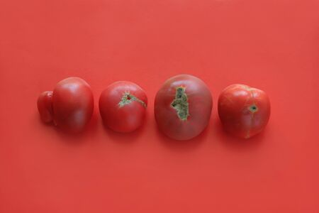 Ugly food concept, deformed tomatoes on the red background, copy space, minimalistic style. Banque d'images
