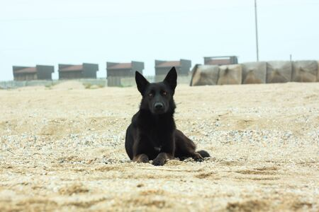 A black dog is sitting on the sand beach. Cold foggy rainy weather. Walking with pets. Travel street photography. Autumn and winter sea shore background. Banco de Imagens - 132104530