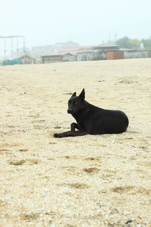 A black dog is sitting on the sand beach. Cold foggy rainy weather. Walking with pets. Travel street photography. Autumn and winter sea shore background. Banco de Imagens - 132106278