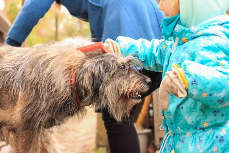 Young girl combing her dog. Care for animal hair. Combs for pets. Love, caring.