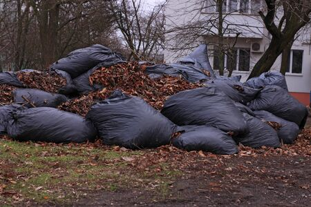 Large overflowing black trash bags full of raked up dry tree leaves in local area. Parks, courtyards of residential buildings janitors cleaning.Ecological problems, environmental protection,composting