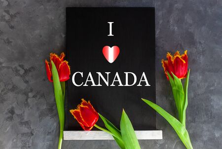 I love Canada text written in a chalkboard and heart with red and white flag colors on grey concrete background with fresh tulips. Canadian Day concept banner. Blooming flowers flat lay greeting card.