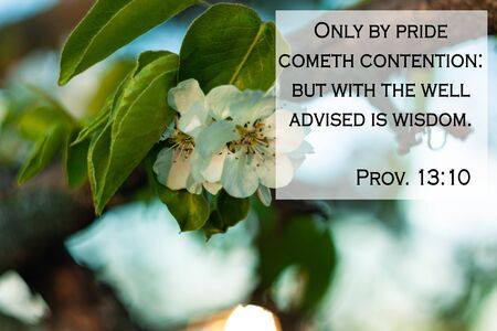 Bible quotes on blurred blooming nature background. Only by pride cometh contention: but with the well advised is wisdom. Card text sign for believers. Inspirational verse praying thought.
