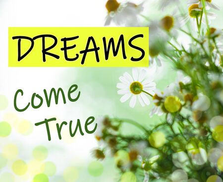 Dreams Come True text sign. Blooming camomiles bouquet green leaves. Blurred bokeh lights flowers background selective focus. Love greeting card. Motivation inspirational quotes for successful people
