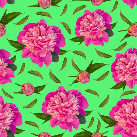 Pink peony flowers seamless pattern on green background. Beautiful blooming head for textile, website floral design. Rose colored Paeonia lactiflora plants with green leaves. Colorful peonies petals.
