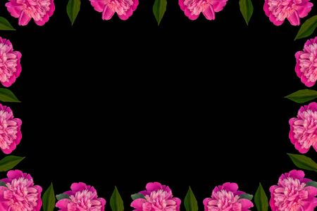 Pink peony flowers frame with copy space on black background. Beautiful blooming flower heads for website floral design. Paeonia lactiflora plant green leaves. Colorful peonies petals.