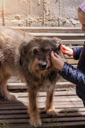 Hands of a young girl combing the dog. Care for long fur animals. Combs for pets. Love, caring, puppies adoption concept. Street homeless mongrel shelter. A dog sitting on a wooden bench outdoor.
