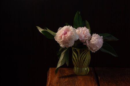 Pink peony flower on black background. Beautiful botanical floral design. Creative minimalism dark and moody style. White light rose colored blooming Paeonia plant with green leaves and petals in vase