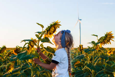 Cute girl in white t-shirt smelling sunflower in the field on the sunset. Child with long blonde braided hair on countryside landscape with yellow flower in hand. Farming concept, harvesting wallpaper.