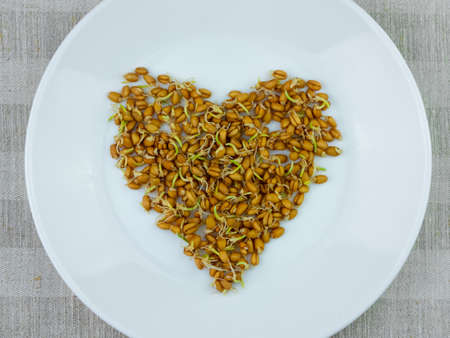 Sprouted wheat grains heart white plate linen background. Macrobiotic food sprouts vegetarian meal. Healthy diet concept. Home growing plants in spring.Fresh sprouts germination, Protein rich Superfood