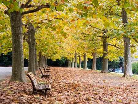 Japan shinjuku gyoen at autumn