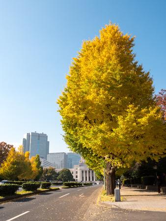 dode bladeren: Tokyo autumn leaves Stockfoto