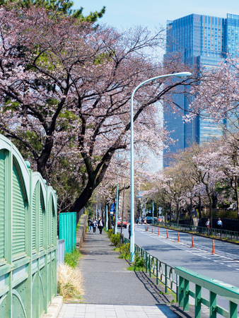 Japanese tomb and Cherry blossoms