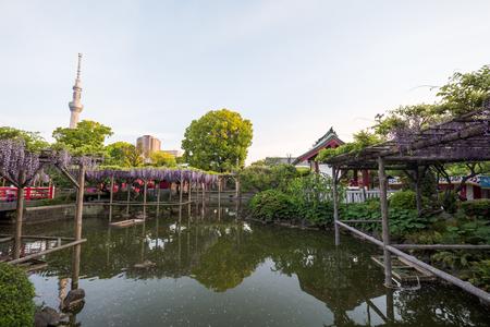 Japanese Shrine and Wisteria Stock Photo