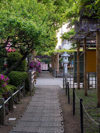 Japanese Shrine and Wisteria Editorial