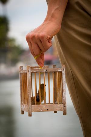 oiseaux de torture Banque d'images