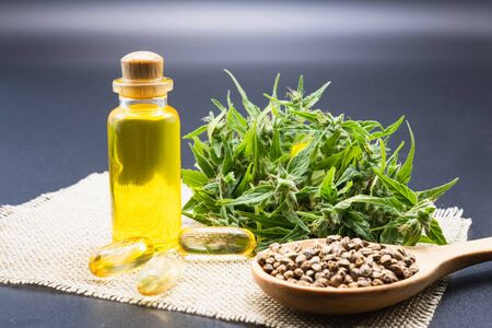 CBD hemp oil in a glass bottle. Hemp seeds in a wooden spoon And the hemp leaf is placed on the table. The concept of cannabis for medicinal purposes. Hemp oil extraction components.