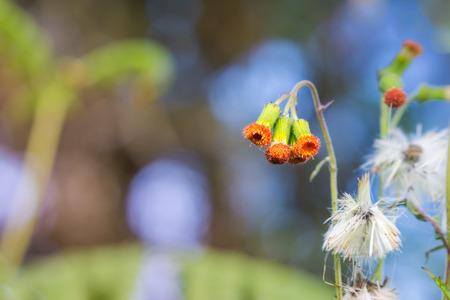 unwanted flora: wildflower in rainforest