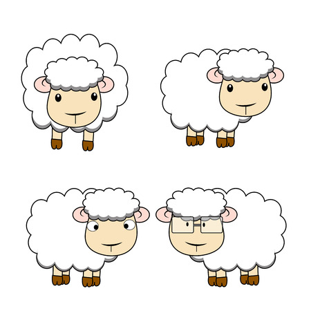 while: sheep