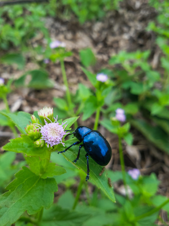 blue bug Zdjęcie Seryjne
