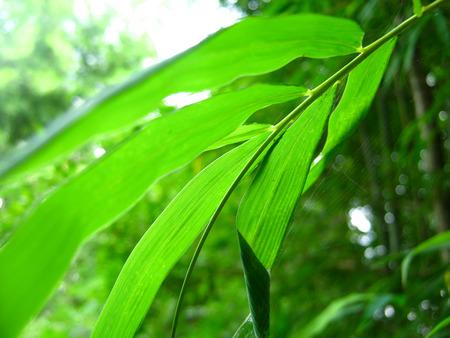 bamboo Zdjęcie Seryjne