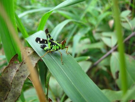 grasshopper Zdjęcie Seryjne