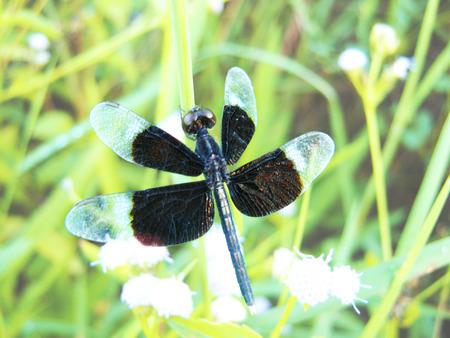 dragonfly Zdjęcie Seryjne - 48054757
