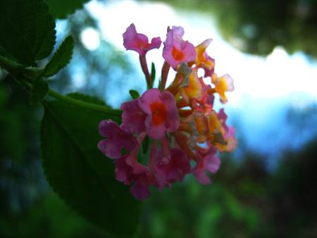 flower Zdjęcie Seryjne - 48054765