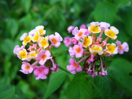 flower Zdjęcie Seryjne - 48054760