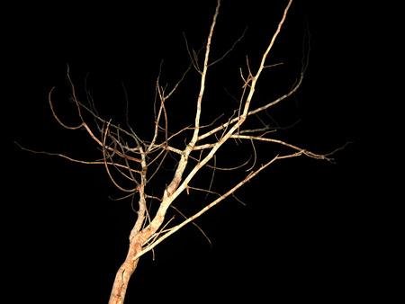 dead tree Zdjęcie Seryjne - 48054832