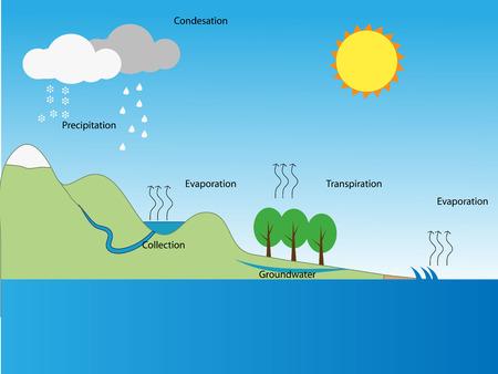 diagrama de arbol: ciclo del agua Vectores