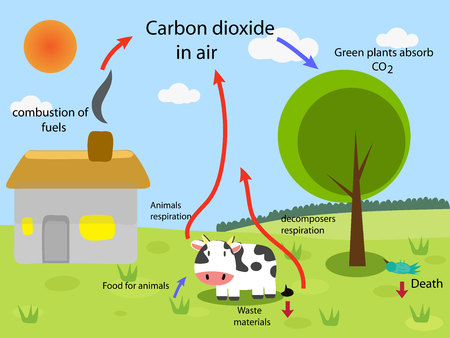 absorb: carbon cycle
