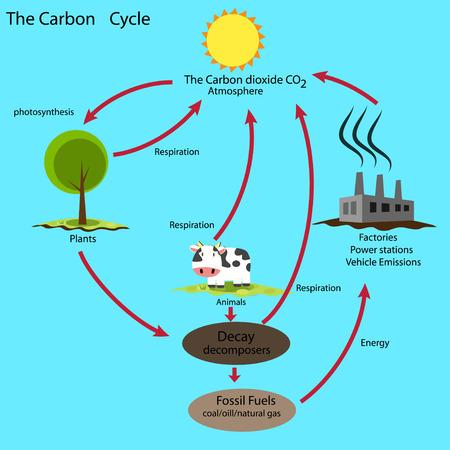 koolstofcyclus