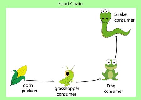 Food chain Zdjęcie Seryjne - 48055006