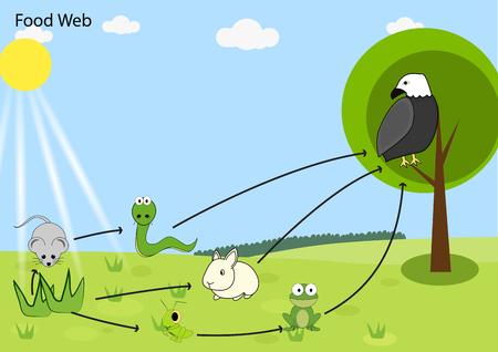 food chain: food chain